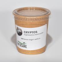 CRYTPOS roofkever larven biologische bestrijding wolluis