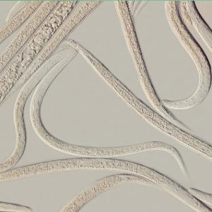 LARVANEM: Heterorhabditis bacteriophora