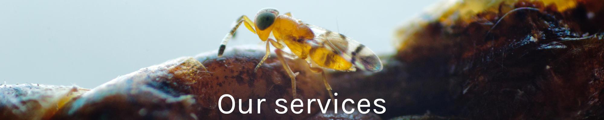 Onze services banner EN 2000x400